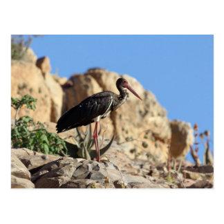 Black stork (Ciconia nigra) on a rock. Postcard
