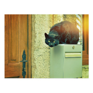 black street cat postcard