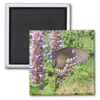 Black Swallowtail 63 ~ magnet