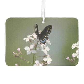 Black swallowtail butterfly air freshener