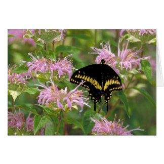 Black Swallowtail Butterfly Card