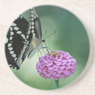 Black Swallowtail Butterfly on a Pink Flower Coaster