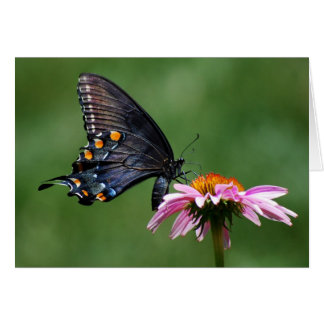 Black Swallowtail Butterfly on Coneflower Card