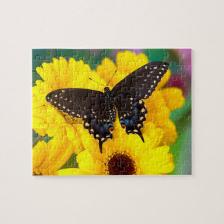 Black Swallowtail butterfly Puzzle