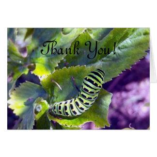 Black Swallowtail Caterpillar 2 Greeting Card