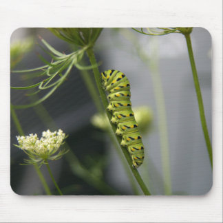 Black swallowtail caterpillar (parsleyworm) on Dil Mouse Pad