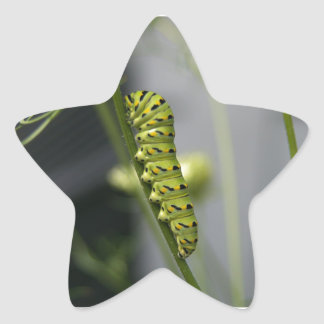 Black swallowtail caterpillar (parsleyworm) on Dil Star Sticker
