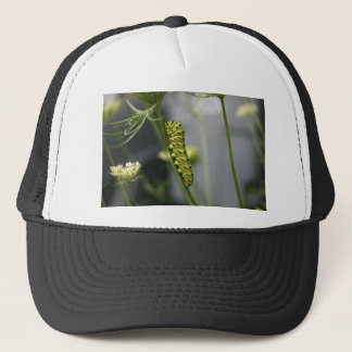 Black swallowtail caterpillar (parsleyworm) on Dil Trucker Hat