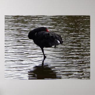 black swan 2 poster