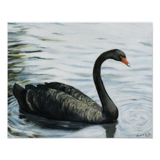 """Black Swan"" Bird Art Print"