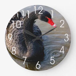 Black Swan Swimming In Water, Animal Photograph Wallclocks