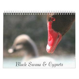 Black Swans & Cygnets Wall Calendar