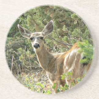 Black Tail Deer Coaster