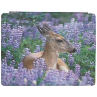 Black-tailed deer, doe resting in siky lupine, iPad cover