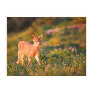 Black-tailed Deer fawn Stretched Canvas Print