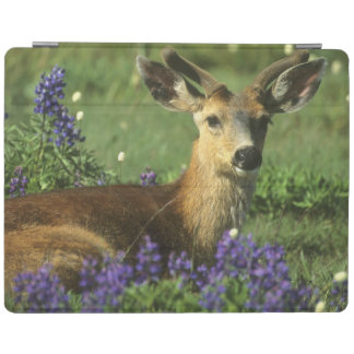 Black-tailed Deer, Odocoileus hemionus), in iPad Cover