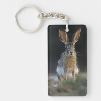 Black-tailed Jackrabbit, Lepus californicus, 2 Keychain