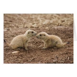 Black Tailed Prarie Marmot Card