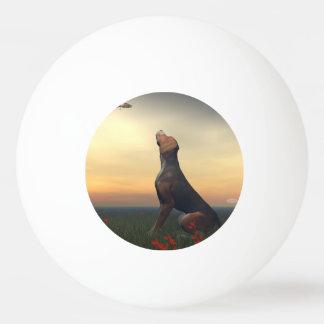 Black tan dog looking a bird flying ping pong ball