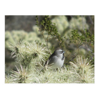 Black-Throated Sparrow on Cactus Postcard
