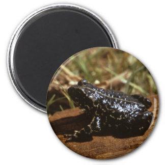 Black Toad Magnet