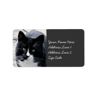 Black Tom Cat with White Markings Label
