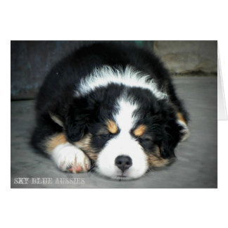 Black Tri Australian Shepherd Greeting Card