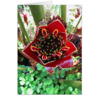 Black Tulip Torch Ginger Card