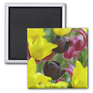 Black Tulips Magnet