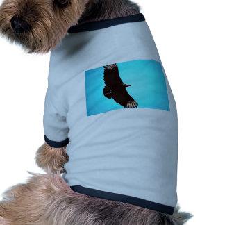 Black vulture, in flight pet tee shirt