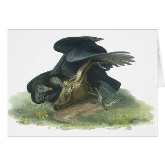 Black Vulture, John Audubon Card