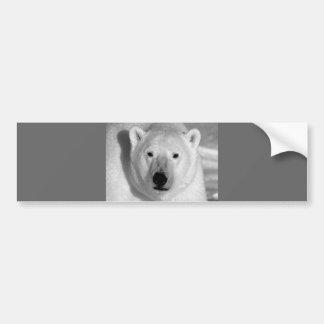 Black & Whit Polar Bear Bumper Sticker