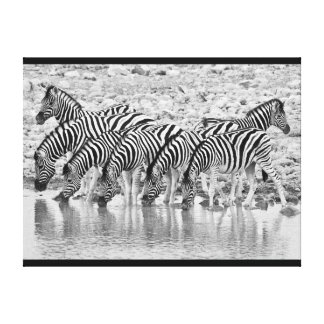 Black White African Zebra Grouping Wrapped Canvas