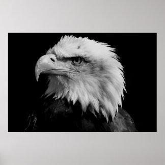 Black & White American Bald Eagl Poster