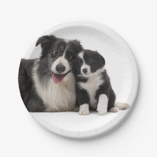 Black & White Border Collie Puppy Dog Paper Plates