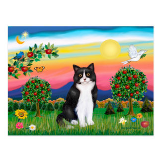 Black & White Cat - Bright Country Post Card