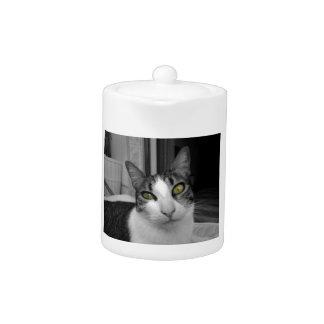 Black White Cat Photo