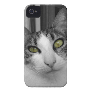 Black White Cat Photo iPhone 4 Cover