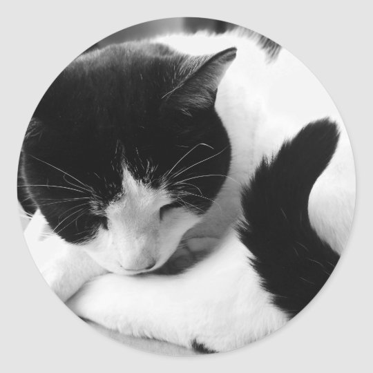 Black & White Cat Photo Stickers