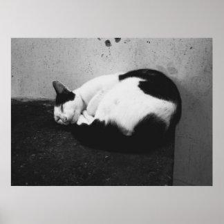 Black & White Cat Poster