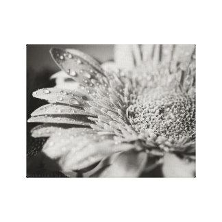 Black & White Flower & Droplets Canvas Print