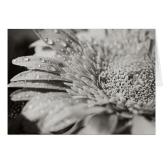 Black & White Flower & Droplets Note Card (blank)