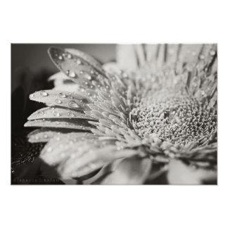 Black & White Flower & Droplets Photo Print