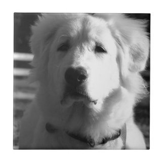 Black & White Great Pyrenees Tile