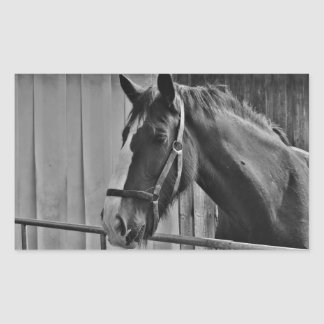 Black White Horse - Animal Photography Art