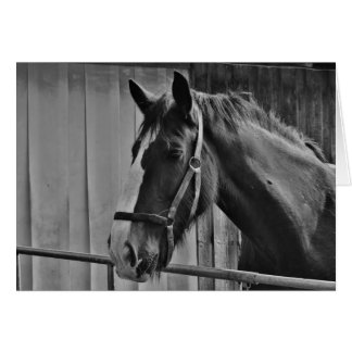 Black White Horse - Animal Photography Art Card