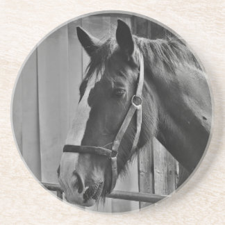 Black White Horse - Animal Photography Art Coaster