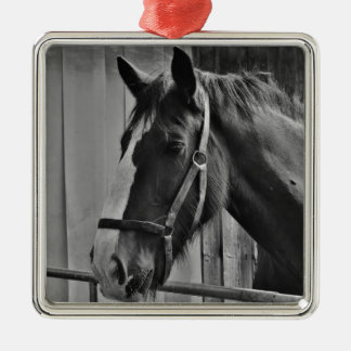 Black White Horse - Animal Photography Art Metal Ornament