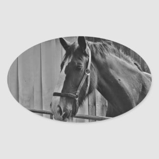 Black White Horse - Animal Photography Art Oval Sticker