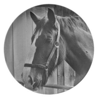 Black White Horse - Animal Photography Art Plate